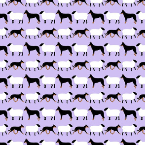 Basic Beaucerons and sheep - lavender