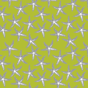grey sea star on chartreuse