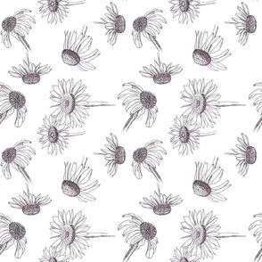 Echinaceae - Black and White