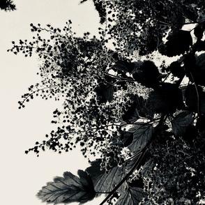 darkfoliage
