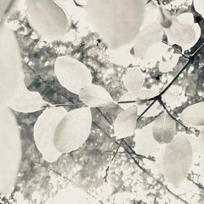 leafthelight