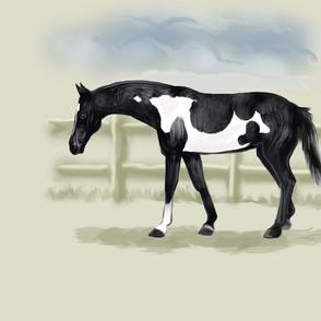 Piebald Pinto Horse for Pillow