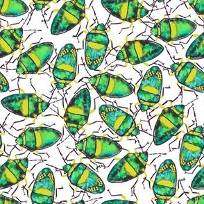 Emerald-Yellow Bugs bunch