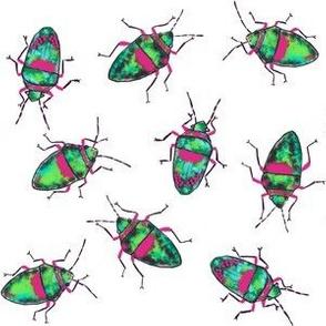 Emerald-Pink bugs