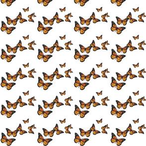 many-butterflies