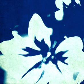 Blue-White flower