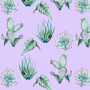 Succulents and cactuses 2