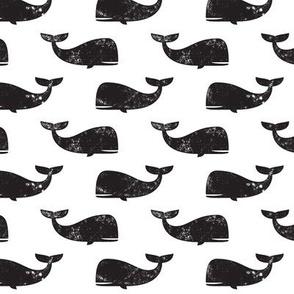 whales -  black