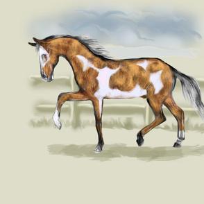 Golden Bay Pinto Horse for Pillow