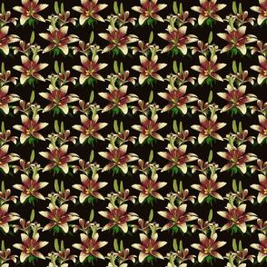 Dragon Lily on black 4x4
