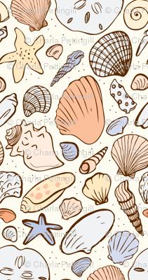 Shoreline Seashells