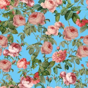 Pink Vintage Roses on Teal