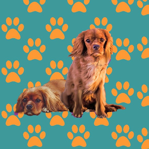 ruby spaniels  on aqua background