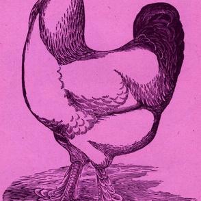 Victorian Etching, Light Brahma Cock magenta