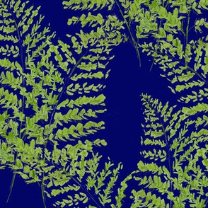 Hand-drawn  Feathery Ferns