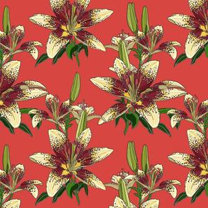 Dragon Lily on salmon 12x12