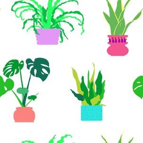 Simple Potted Plants in White