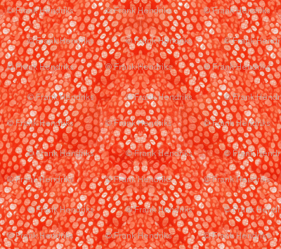 octo skin1ab