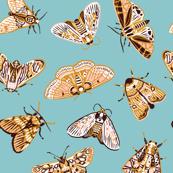Vintage moths
