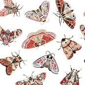 Craft moths