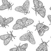 Ink moths