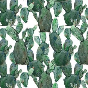 cactus-time