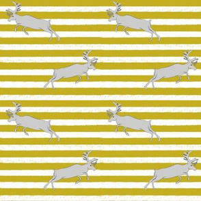 Mustard stripe and Gray Deer