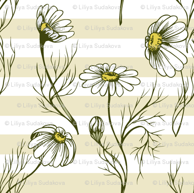 Camomile on a yellow stripes