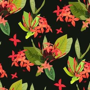 Ixora tropical red flowers