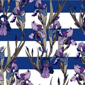 Irises flowers on blue and white stripes
