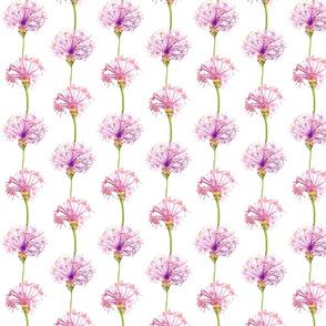 Pom Pon Pink