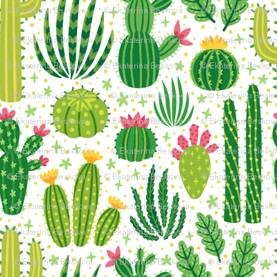 Cacti summer. Small scale