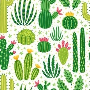 Cacti summer. Medium scale