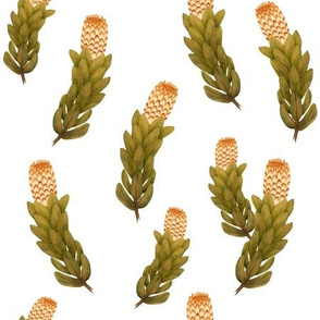 Protea 1 Golden Mustard