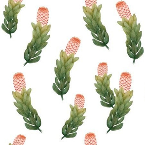 Protea 1 Coral and Green