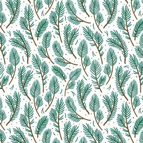 Spruce branches. White background.