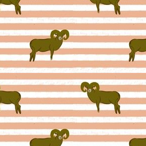 Striped Big Sheep