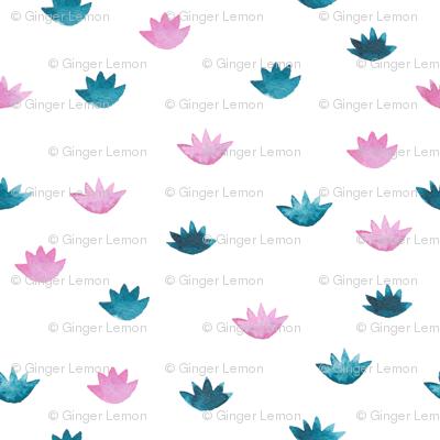 lotuses bicolored