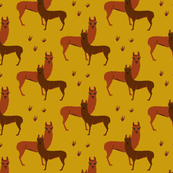 llama, alpaca, lama, baby boy, baby girl, boy, girl,mustard, desert, steppe, yellow, farm, animal