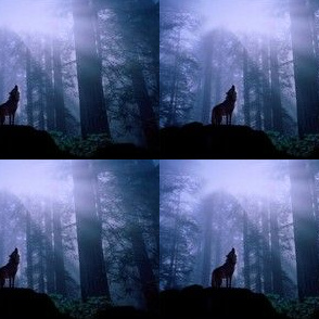 Moonlight Wolf Howl