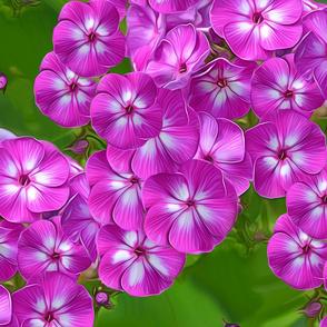 PurpleFoxyPloxs