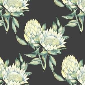 protea black