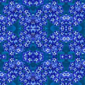 BlueFoxyPlox