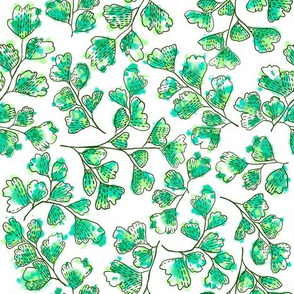 Emerald Maidenhair Ferns (white)