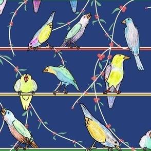 Penciled Parakeets