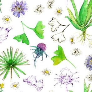 Medicinal Herbal White