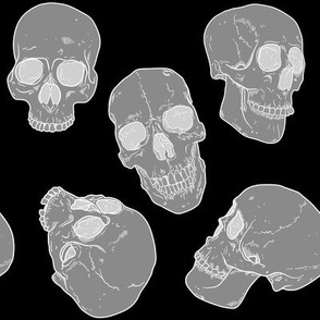Rx-ray-of-skulls_shop_thumb