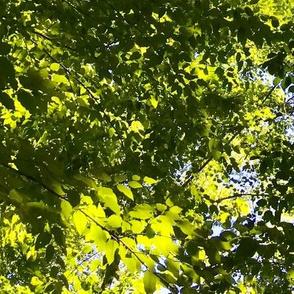 Peek through the trees