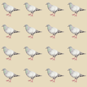 Pigeons on parade