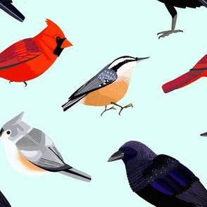 birds2 aqua